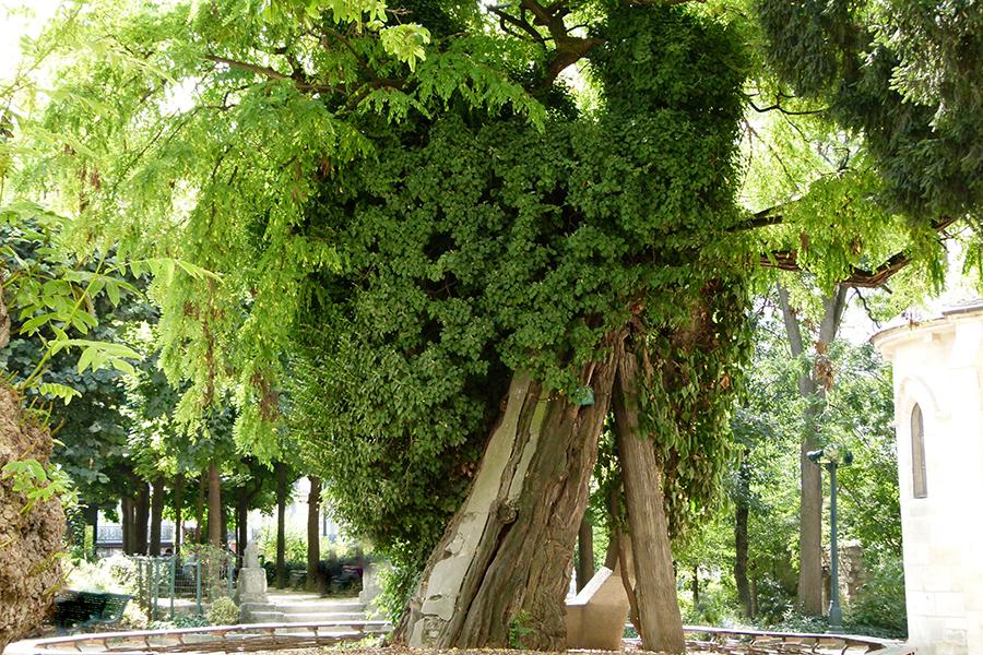 arbre quartier latin