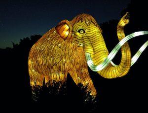 illuminations au jardin des plantes - fêtes de fin d'année à Paris