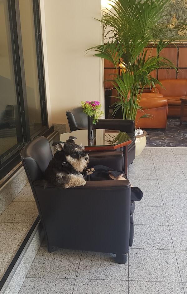 L'hôtel Raspail Montparnasse, un hôtel parisien qui a du chien !